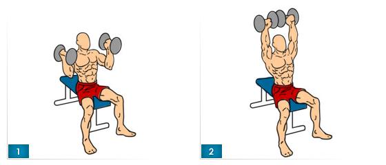 arnoldove-tlaky-cviky-na-ramena-2