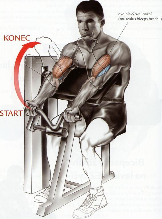bicepsovy-zdvih-na-stroji