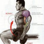 Bicepsový zdvih s jednoručkami v sede