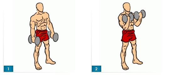 bicepsovy-zdvih-s-jednoruckami-v-stoji