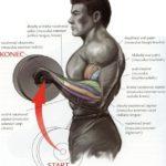 Bicepsový zdvih s veľkou činkou nadhmatom