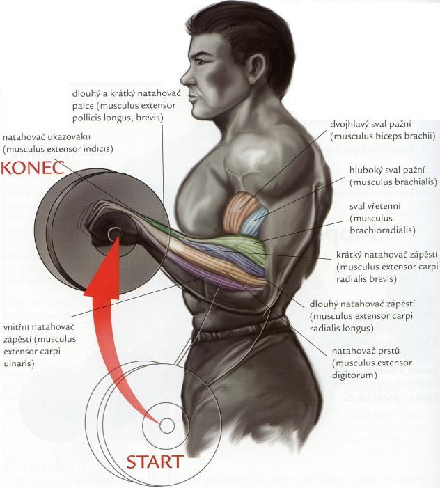 bicepsovy-zdvih-s-velkou-cinkou-nadhmatom