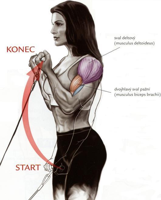 bicepsovy-zdvih-spodnej-kladky-v-stoji