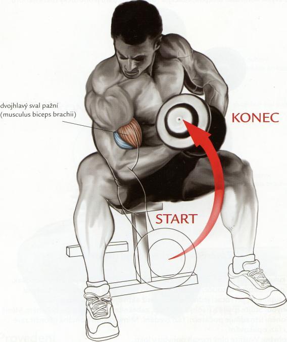 koncentrovany-bicepsovy-zdvih