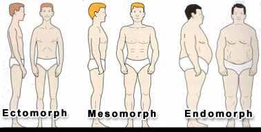 somatotypy-endomorf-mezomorf-ektomorf