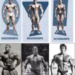 Telesné typy – somatotypy