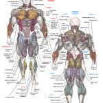 Svaly ľudského tela