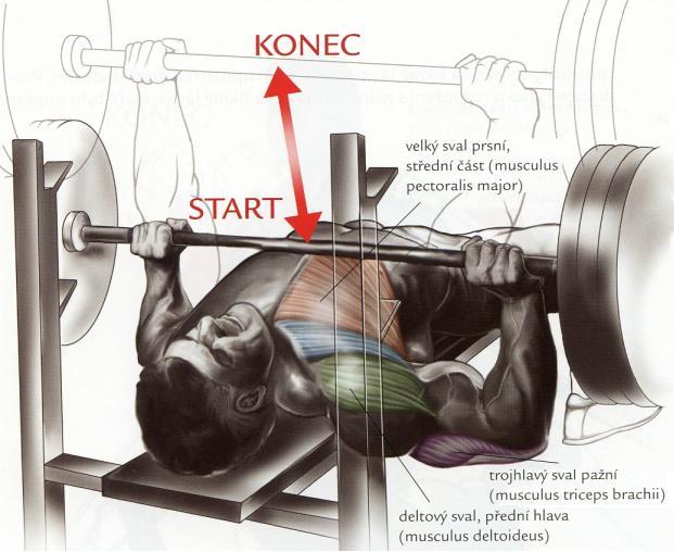 tlak-na-lavicke-s-velkou-cinkou-bench-press