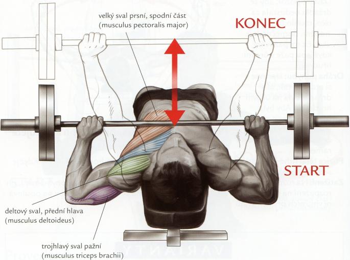 tlak-na-sikmej-lavicke-s-velkou-cinkou-hlavou-dole-sikmy-bench-press