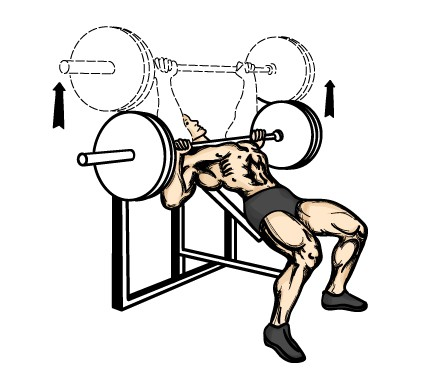 tlak-na-sikmej-lavicke-s-velkou-cinkou-hlavou-hore-sikmy-bench-press-silueta