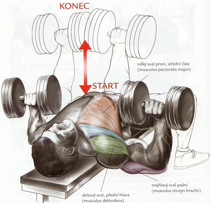 tlak-s-jednoruckami-na-rovnej-lavicke-bench-press-s-jednoruckami