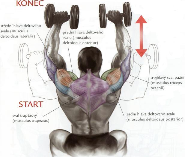 tlaky-na-ramena-s-jednoruckami-v-sede-cviky-na-ramena