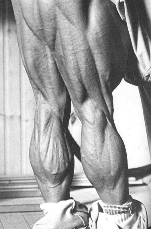 tom-platz-nohy-dvojhlavy-stehenny-trojhlavy-lytkovy