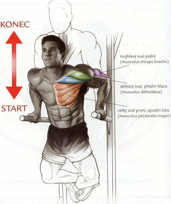 tricepsove-kliky-na-bradlach