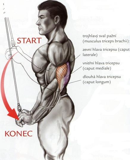 tricepsove-stahovanie-kladky