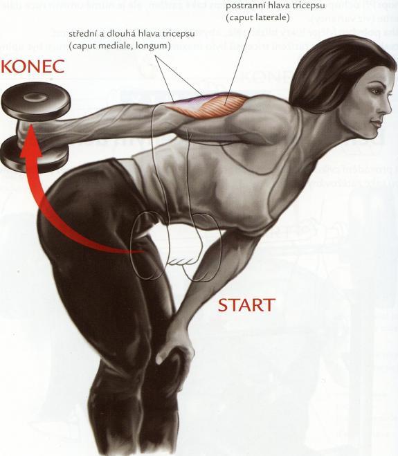 tricepsovy-kick-back-v-predklone